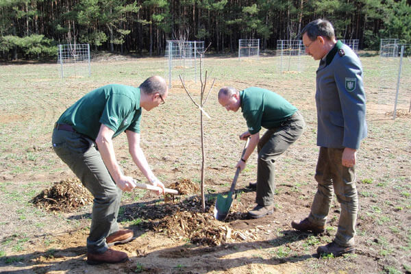 Since 2010, Piepenbrock has been planting trees in the company-owned forest together with its customers.